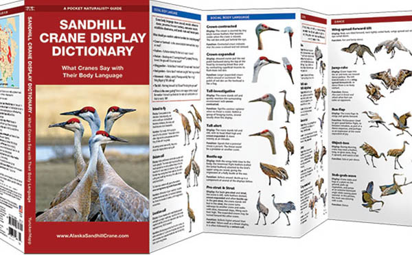 Sandhill Crane Display Dictionary